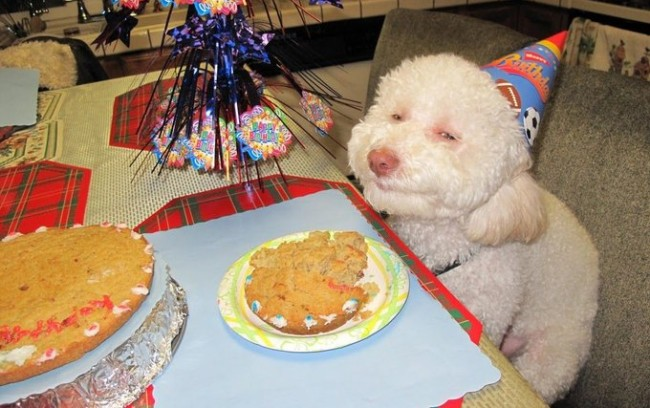 birthday-dog
