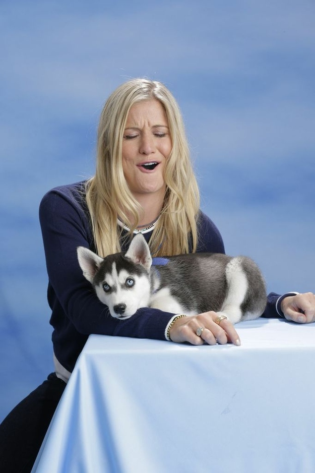 Sassy Siberian Husky Pup Weighs In On Team USA Olympians ...
