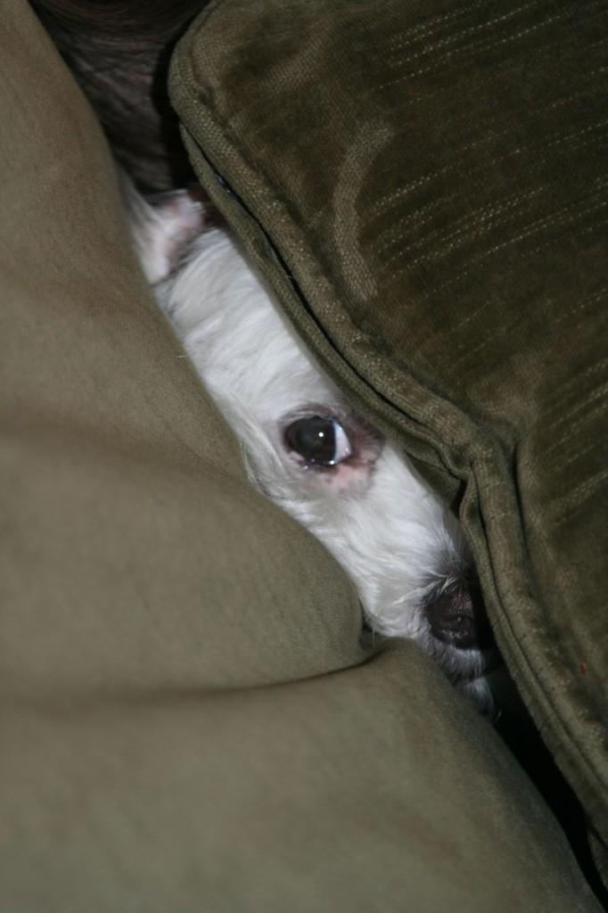 Cushion dog