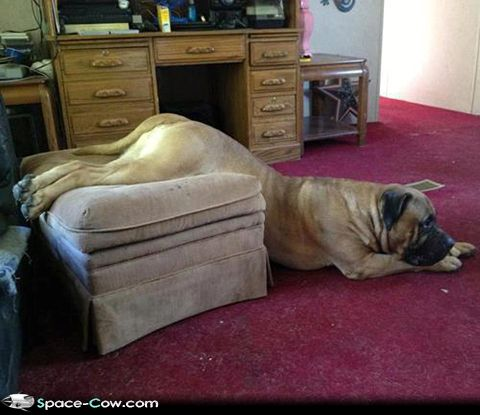 We need new furniture funny animals dogs pics