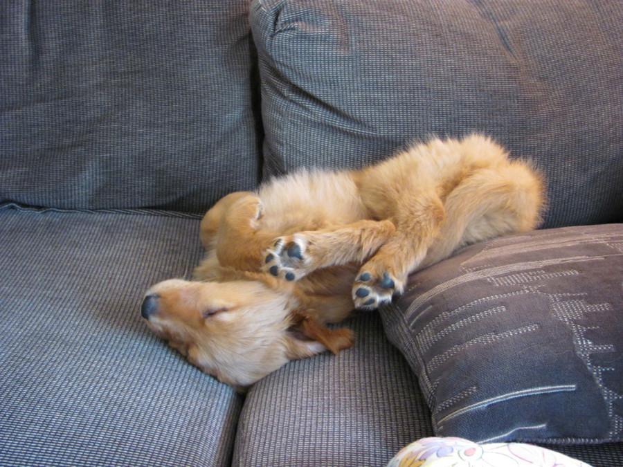 http://thebarkpost.com/30-dogs-awkwardly-sleeping/4681853644_e9bce291c4_b/