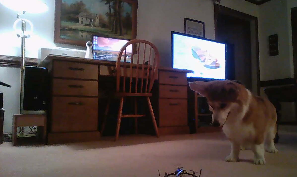 corgi vs quadcopter
