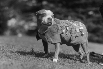 Dog Wearing Military Medals