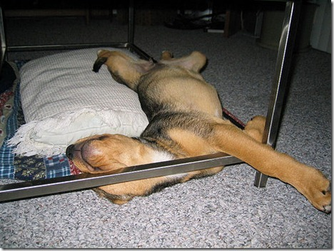 http://cdn.thebarkpost.com/wp-content/uploads/2014/03/sleeping-puppy-funny_thumb.jpg