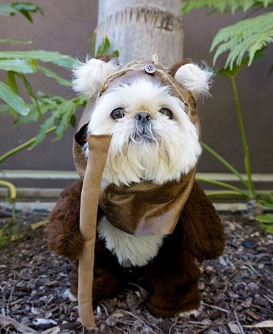 dogs celebrate star wars day the results are hilarious. Black Bedroom Furniture Sets. Home Design Ideas