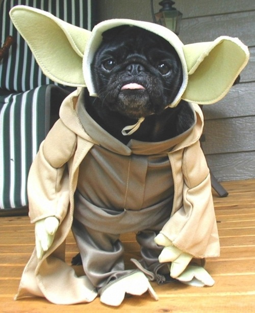 May The Fourth Be With You Toys R Us: French Bulldogs On Pinterest