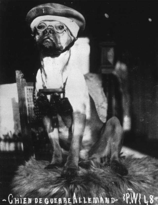 German Army Dog