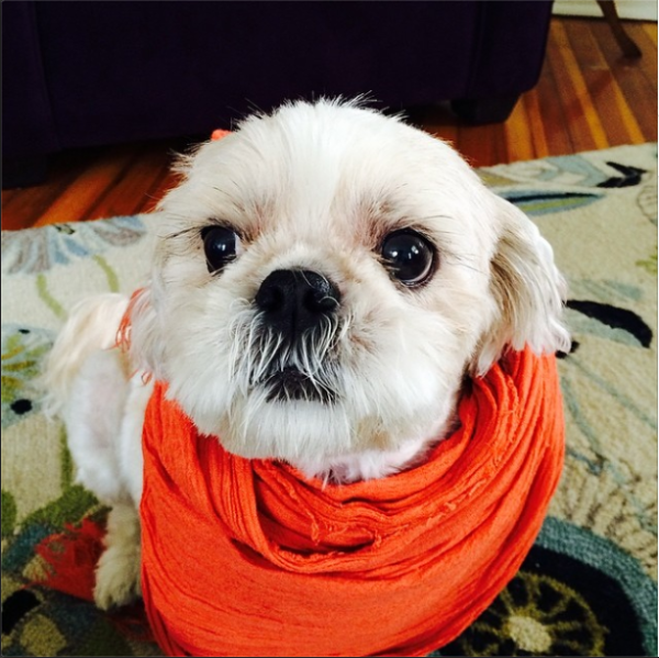Rufus in scarves, Belongs to Jenna Lauren Freed (1)