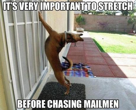 column_01_funny-dog-meme