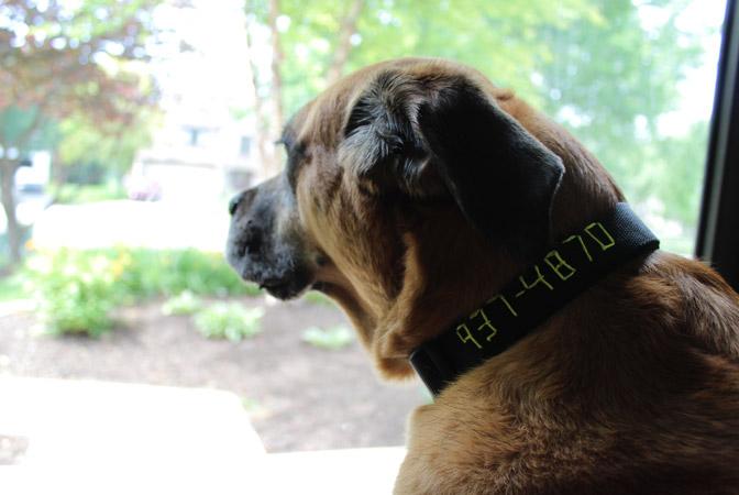 dogcollar_14