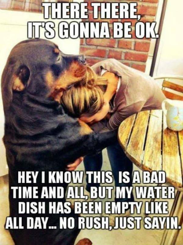 its-gonna-be-ok-dog-meme