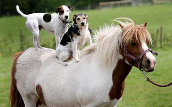 pony_1399008c