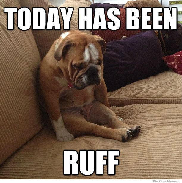 today-has-been-ruff-dog